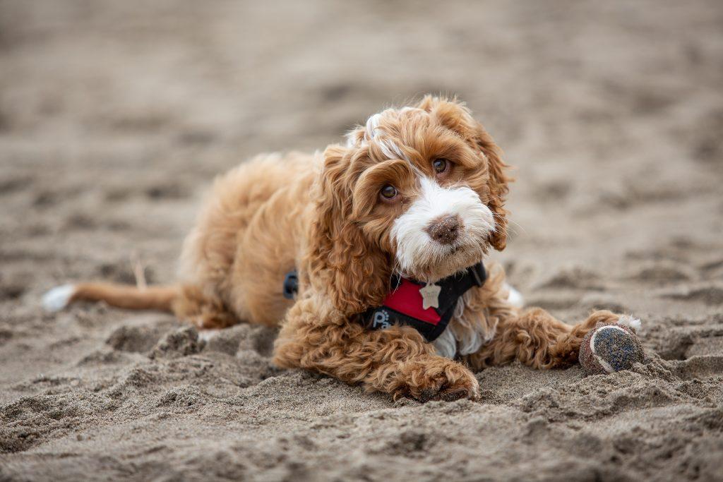 pet photograph on a beach